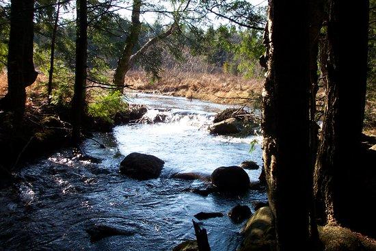 Stony Creek照片