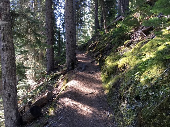 Manning Park, كندا: Walking trail view.