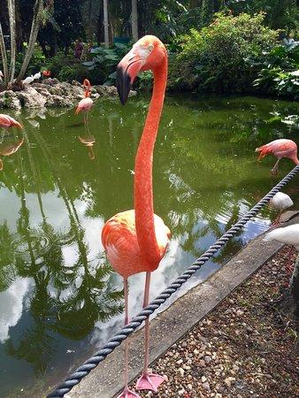 Flamingo Gardens: photo4.jpg