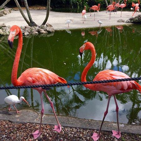 Flamingo Gardens: photo5.jpg