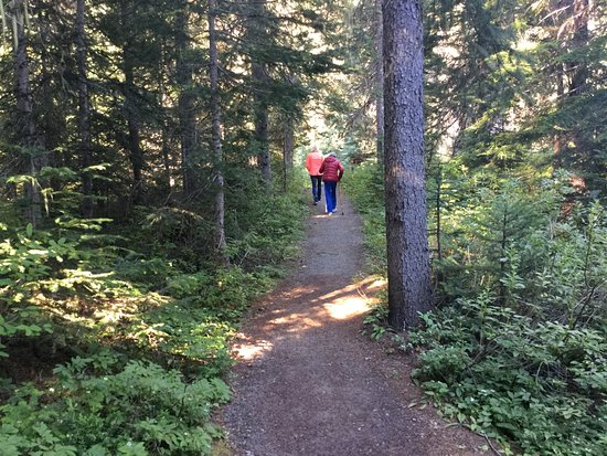 Manning Park, كندا: Walking trail view .. heading up and out.