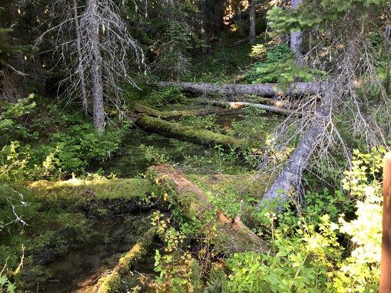 Manning Park, Canada: Nature's art.