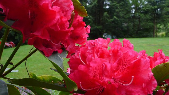 Roberts Creek, Canadá: Flowers - Discovery Place Retreat