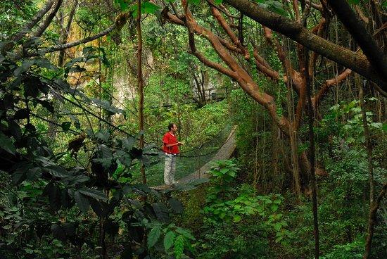 Hotel Reserva Natural Atitlan: Bridges / Puentes
