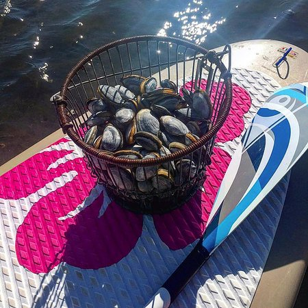 Osterville, Μασαχουσέτη: Clam Digging & Paddle Boarding Trip. AWESOME & you get to make yourself an incredibly fresh dinn