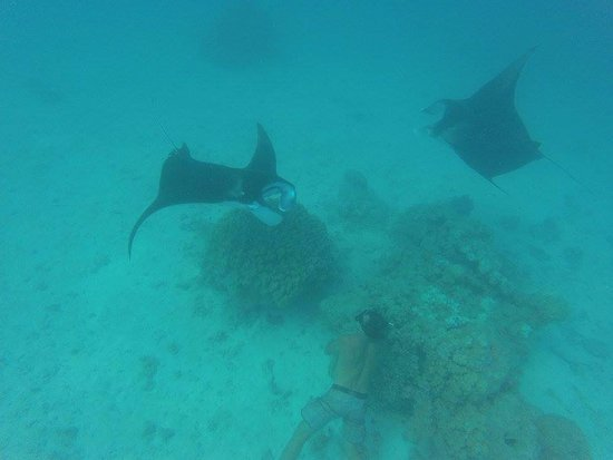 Tikehau Ninamu Resort: Swimming with the Tikehau manta rays