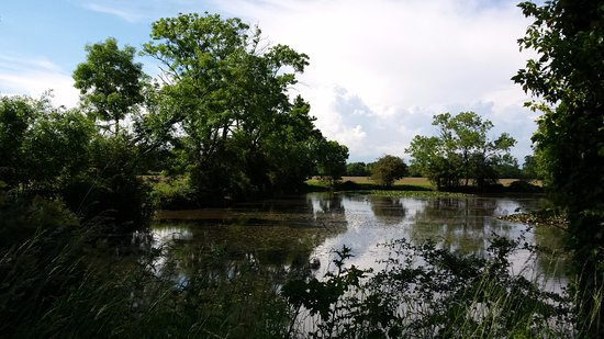 The Stables at Henham Park: Pond on the grounds as you drive to The Stables
