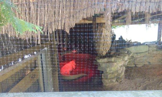 NEW Zoo & Adventure Park: IMG_20160803_121148_large.jpg