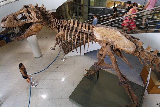 """Indoor//Outdoor 18/"""" DINOSAUR Street Sign t-rex bones paleontologist museum pre"""