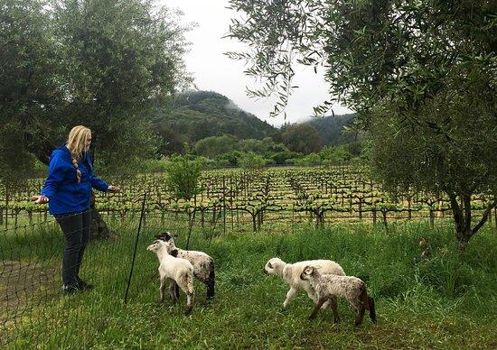 Preston Farms & Winery