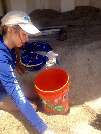 Sandy Beach: 1 baby straggler