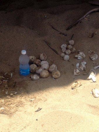 Sandy Beach: Some eggs that didn't hatch