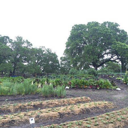 Medlock Ames Winery: The Garden