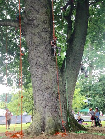 Malmesbury, UK: Tree climbing