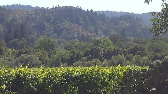 Wine Country Journeys LLC: 20160803_152803_large.jpg
