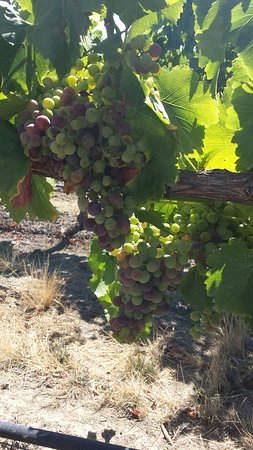 Wine Country Journeys LLC: 20160803_153052_large.jpg
