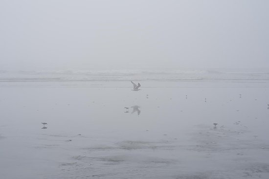 Moclips, WA: The beach was very cold and foggy--but neat.