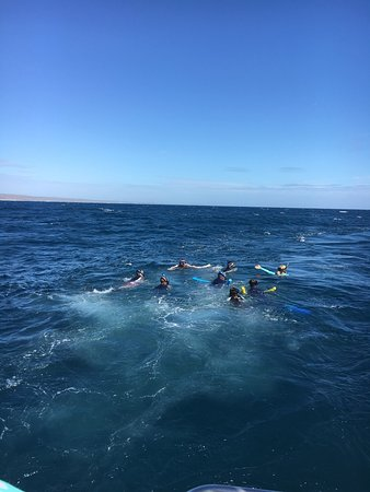 Kings Ningaloo Reef Tours Exmouth: 11 out of 10 to Kings for a wonderful day on the water. What started out as a quiet day ended in