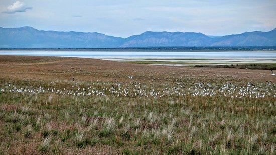 大盐湖州立公园