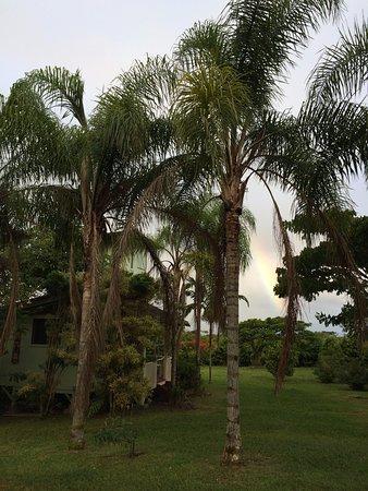 Pahoa, HI: Hidden amongst the trees