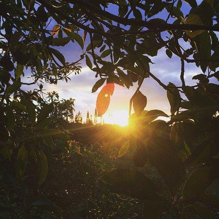 Pahoa, HI: Morning sunrise from the Reflection Room