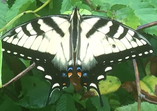 Laurelville, OH: Abundant Butterflies throughout Park & Trails (this at Reservoir)