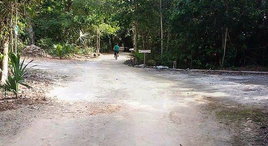 Jolie Jungle: Es el camino principal que te lleva de un extremo a otro de la propiedad y puedes andar en bici