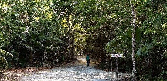 Jolie Jungle: Largo camino para recorrer y disfrutar la selva