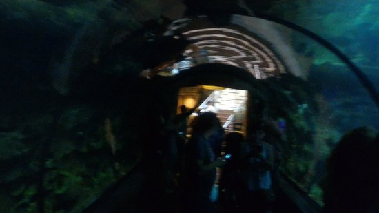 essa é a parte mais bonita do aquário aqui você pode ter uma visão