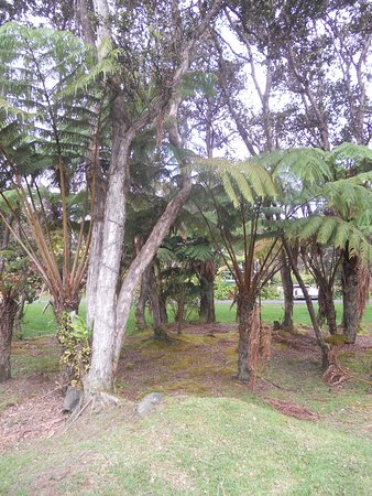 Cooper Center: in the middle of a fern and ohia forest