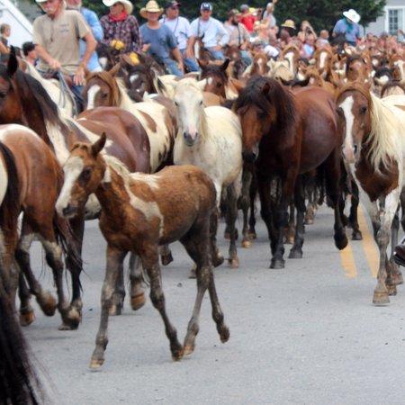 Tom's Cove Park: pony parade