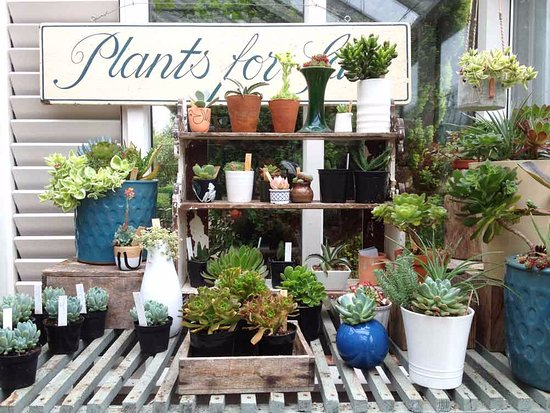 Constantine, UK: Plants for sale in the cafe