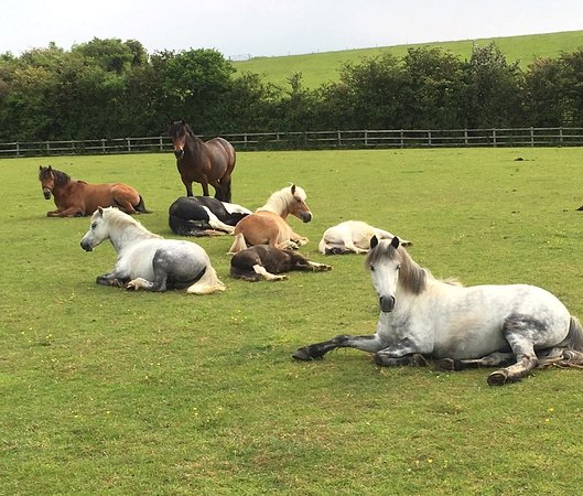 World Horse Welfare - Glenda Spooner Farm