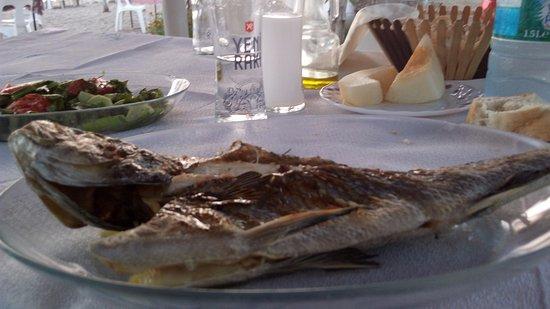 Lepseki, Turquia: kocaman bir deniz levreği yanında peynir ,kavun, salata