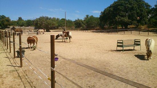 Albufeira Riding Centre: DSC_0368_large.jpg