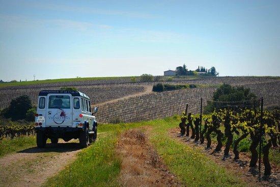 Saint-Laurent-d'Aigouze, فرنسا: Vignovins