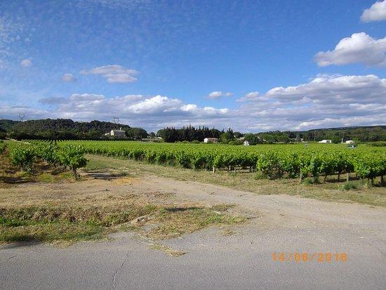 Gard, Frankrike: vigne