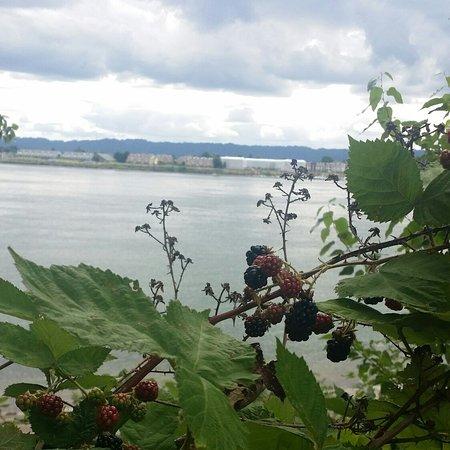Vancouver, WA: Waterfront Renaissance Trail