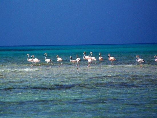 Stella Maris Resort Club: Wild Flamingos