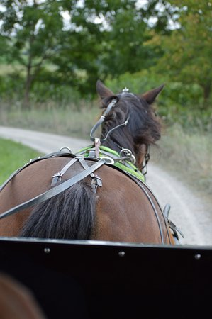 Strasburg, OH: We took an Amish buggy ride