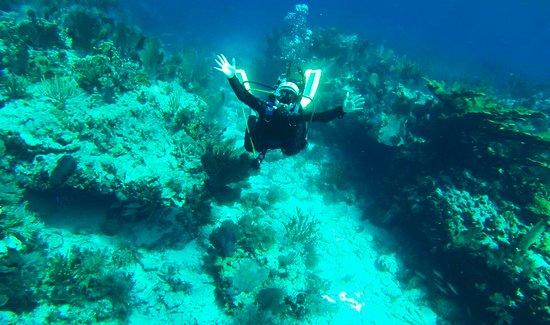 Blue Water Divers: Molasses Reef Diving