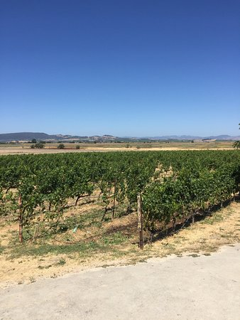 Jacuzzi Family Vineyards: photo1.jpg