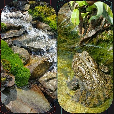Berwick, เพนซิลเวเนีย: Nature