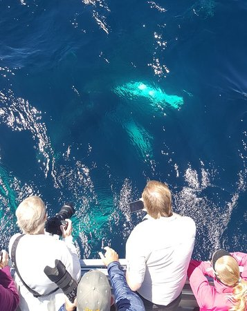Up Close Whale Watching