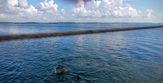 Aransas Pass, TX: Two dolphins I managed to snap