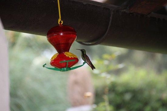 Alma de 7 Lunas: colibri sur la terrasse