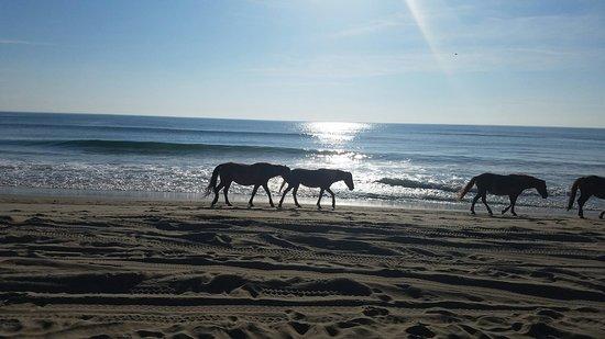 Carova Beach: 20160718_081912_large.jpg