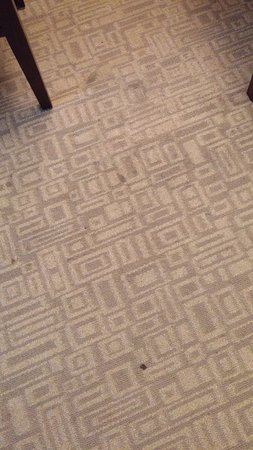 Holiday Inn Express Hotel & Suites Bethlehem Airport - Allentown Area: Dirty carpet