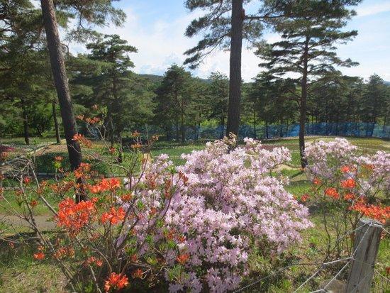 Karumai-machi, Japan: チューリップ園