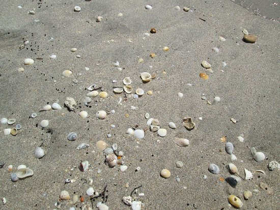 Boynton Beach, FL: Lots of shells in some areas but mostly sand